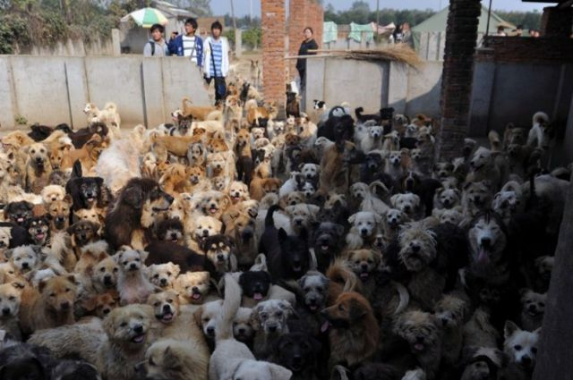 Li Zongwen, dog shelter