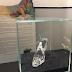 [AO VIVO] Inaugurado Museu do Calçado em S. João da Madeira... com ligação ao Festival da Canção