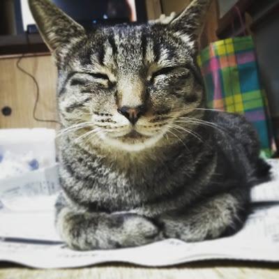 マメ(猫)