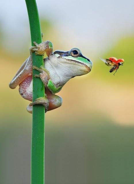 beautiful animals Photos