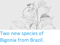http://sciencythoughts.blogspot.co.uk/2014/12/two-new-species-of-bigonia-from-brazil.html