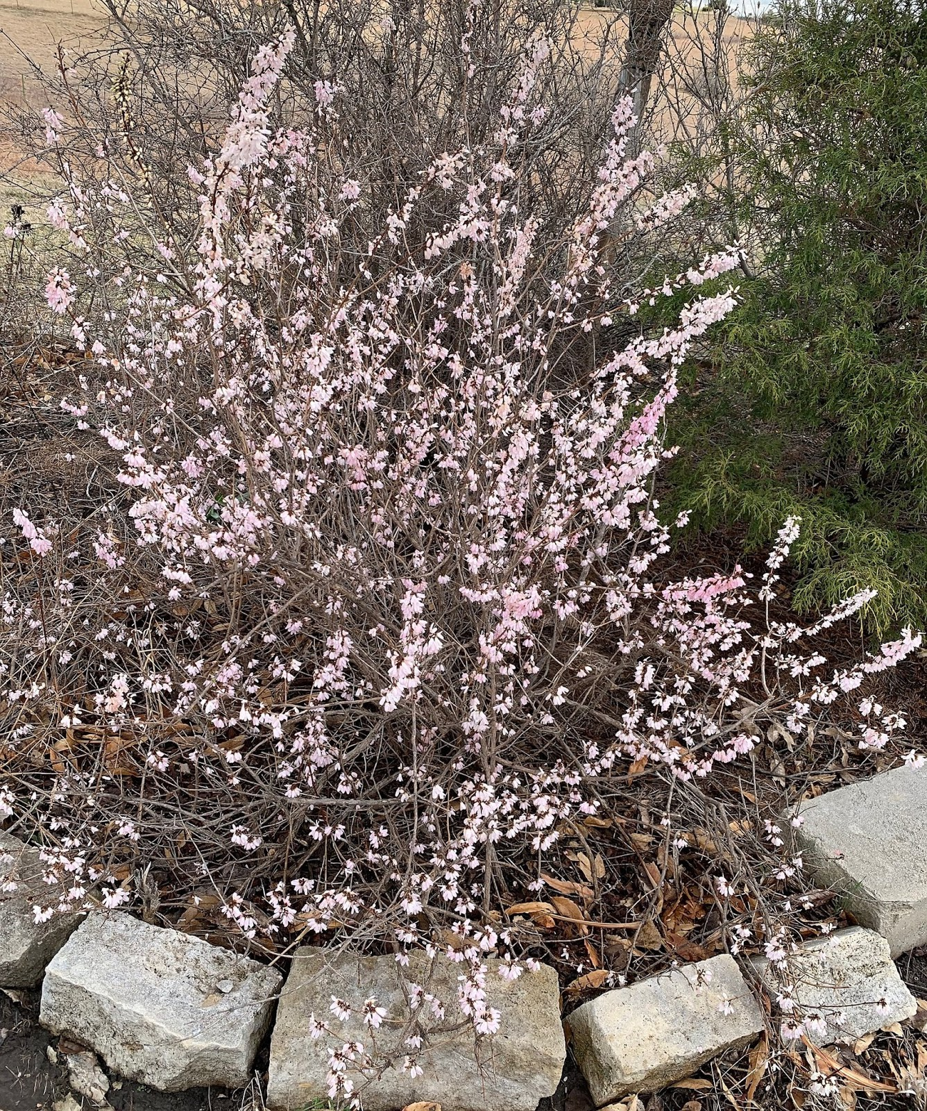Garden Musings Idling In Neutral Gear