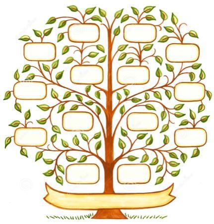 arvore geneal c3 b3gica rosangela romanini sígoli vida consciente