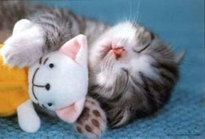 anak kucing comel tidur