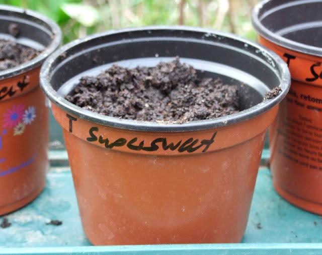 Tipp: Beschriftet die Anzuchttöpfe mit den Namen der gepflanzten Sorten