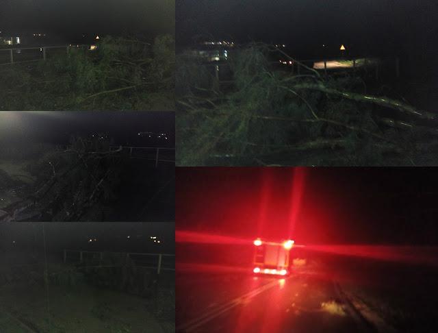 Ήγουμενίτσα: Πτώση δύο δέντρων στον ποδηλατόδρομο Ηγουμενίτσας (+ΦΩΤΟ)