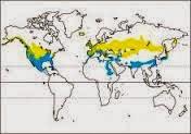Mareca strepera map gadwall