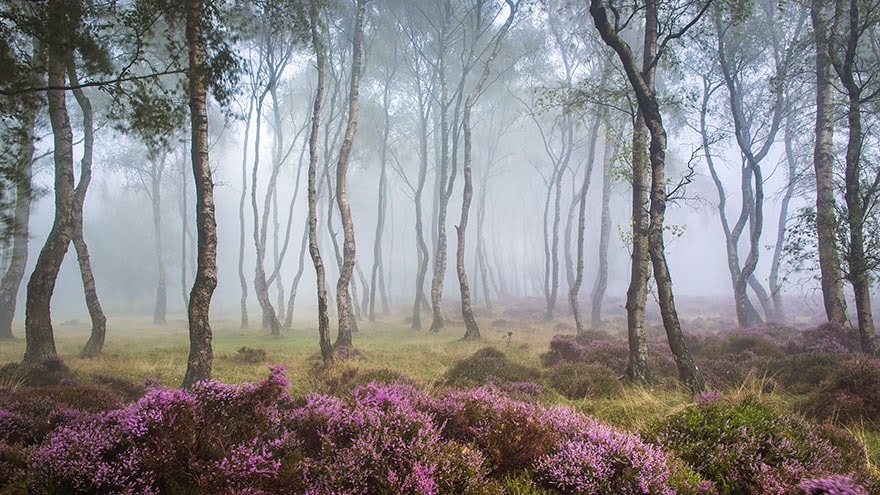 12. Stanton Moor, Peak District, UK - 22 Mysterious Forests I'd Love To Get Lost In