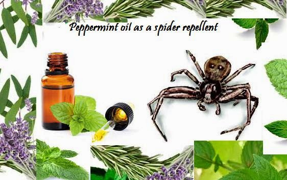 Essential Oils And Herbs Peppermint Oil As A Spider Repellent