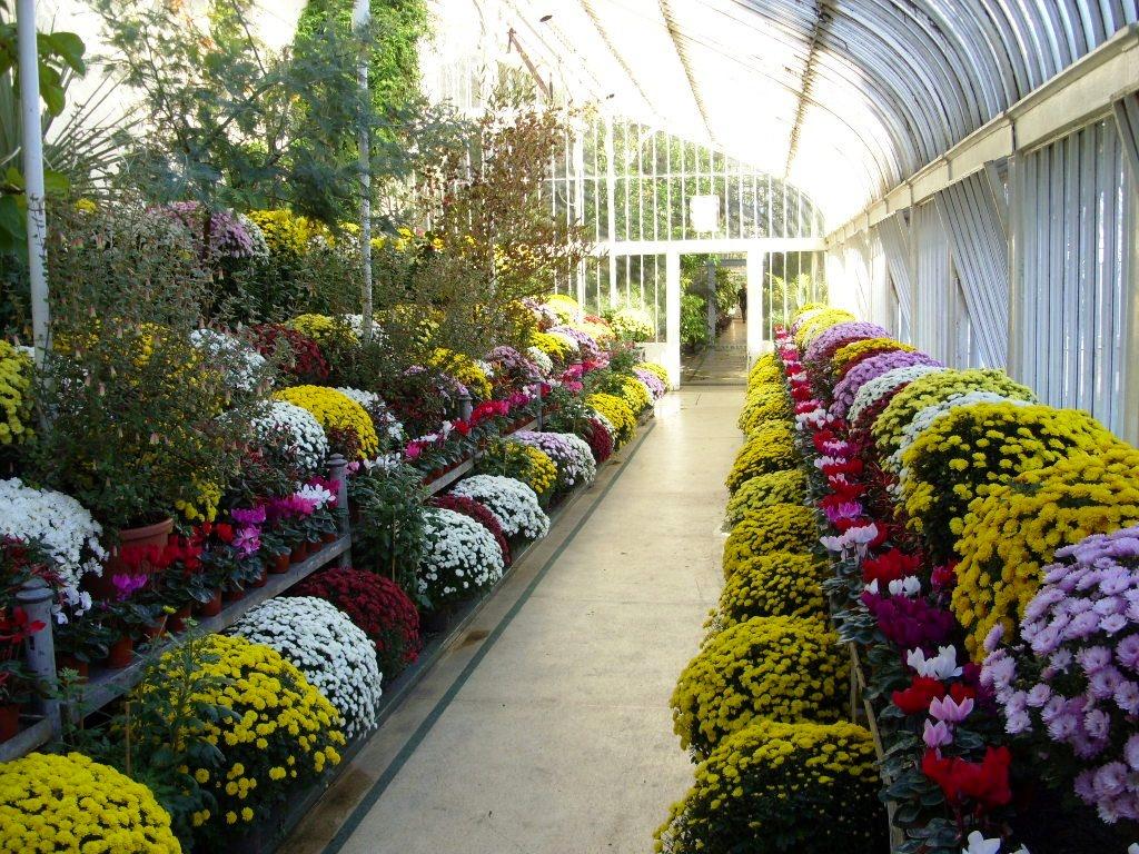 Kelli's Northern Ireland Garden: Botanic Gardens Autumn ...