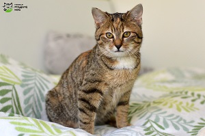 rudy kot, koty do adopcji Wroclaw