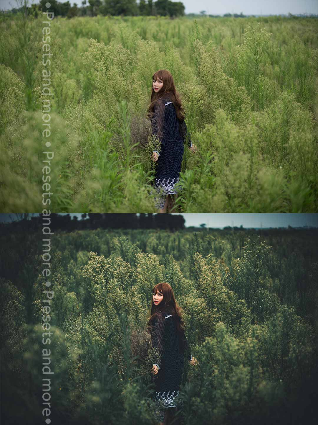 Preset Forest