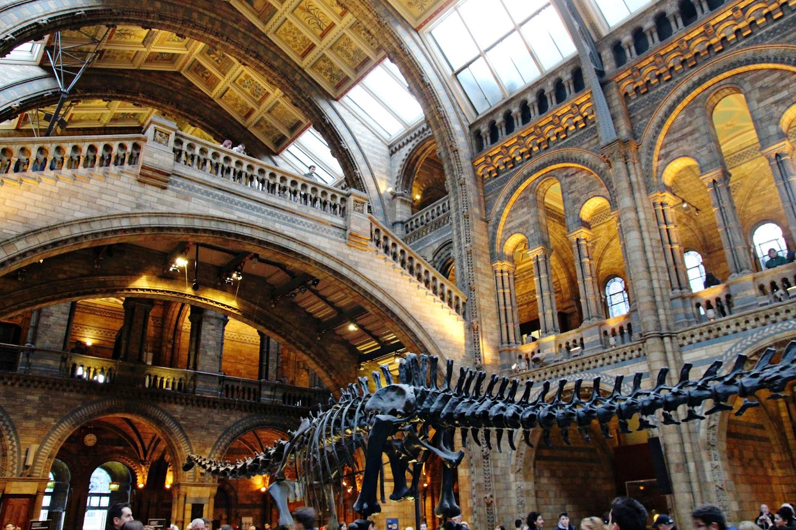 Museum Of Natural History Halls