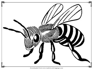 realistic bee coloring pages for adult printable