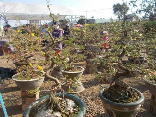 Gia Lai: Người bán hoa hết nỗi lo đập chậu trong đêm giao thừa