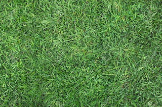 Harga jual rumput jepang
