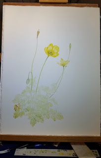 Welsh Poppies on the Good Paper - Welsh Poppy©2018 Polly o'Leary