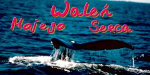 http://walen-mojego-serca.blogspot.com/