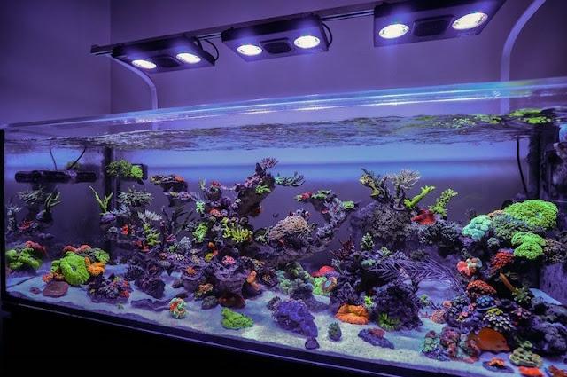 Aquarium Air Laut - Cara Budidaya Ikan