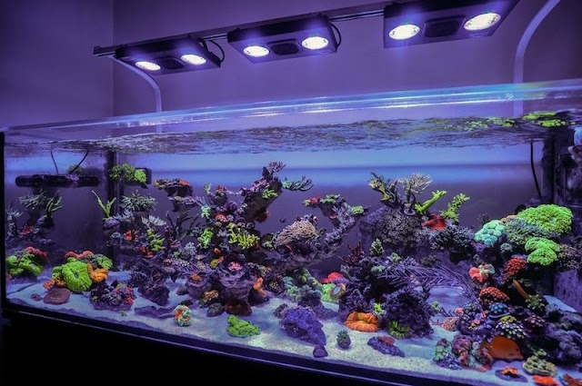 8 Peralatan Membuat Aquarium Air Laut