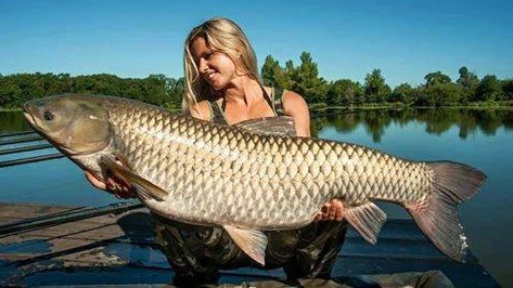 Big fishes of the world grass carp ctenopharyngodon idella for White amur fish