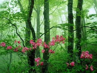 Bashō primavera poesia- wallpapercave-la santa furiosa