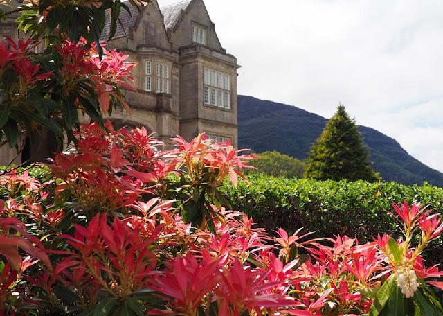 Mucross House, Killarney, punaiset kukat, vuori