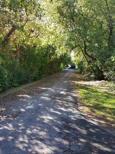 Urban walking path under shade trees Wild Here