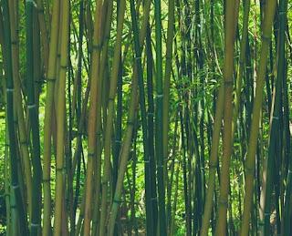 Keunggulan dan Kekurangan Bambu Untuk Membuat Bangunan
