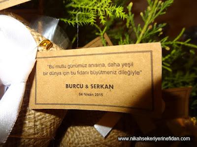 Nikah Çamı Fidesi İzmir 2