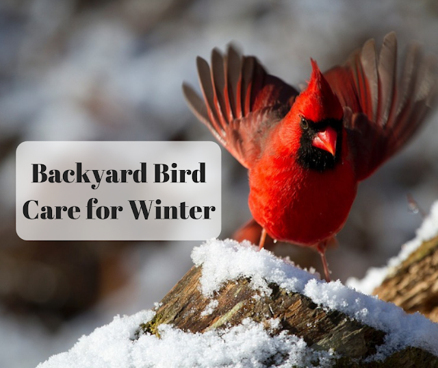 Backyard Bird Care for Winter: Suggestions from the Wildbird Shack