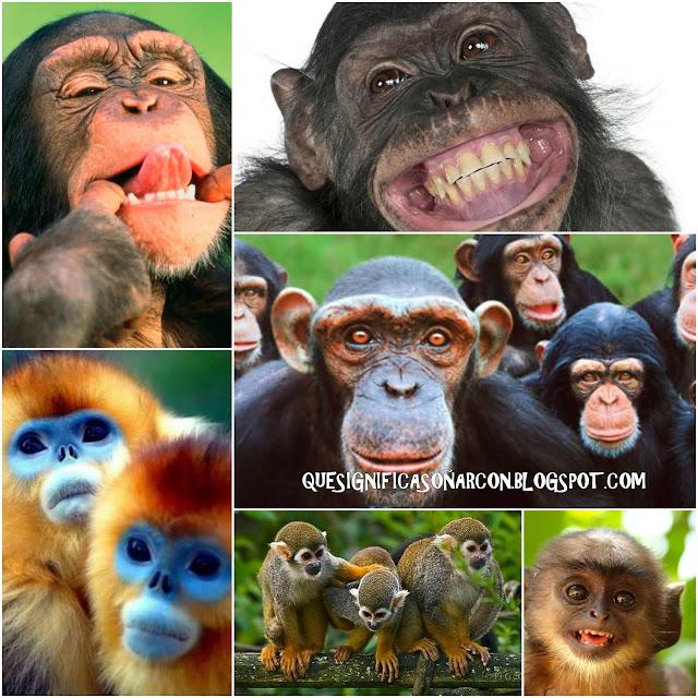 porque soñamos con monos y mandriles