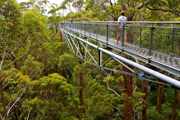 photo source : canopy walks - memphite.com