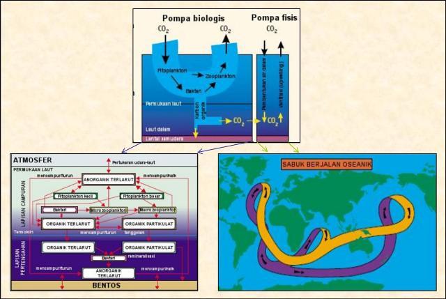 Fungsi laut pada siklus karbon