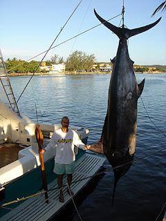 Pesca Submarina | Recorde Brasileiro Marlim Azul dicas de pesca submarina