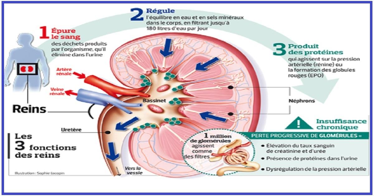 Les médicaments qui détruisent vos reins ! ~ Sport et Santé