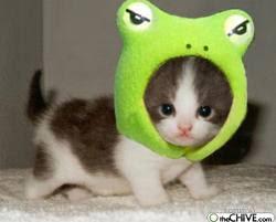 Gambar Lucu Hewan kucing lucu