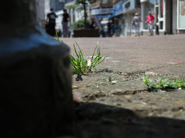 Little tuft of grass growing through brick pavement in busy street.