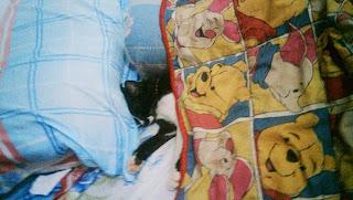 Puciy tidur di kasurku, dan kuselimutin. :3