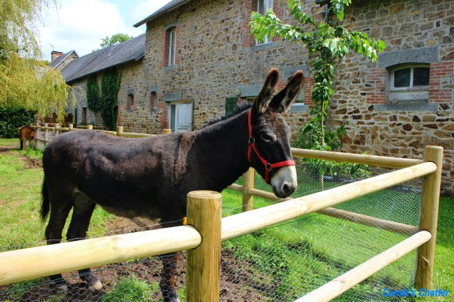 Carole's Chatter: Normandy, France