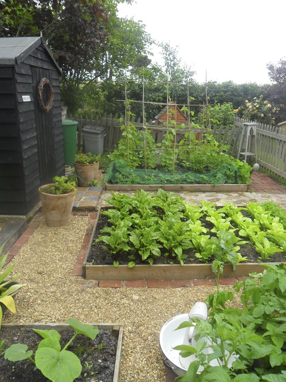 raised bed gardening - pinterest gardening