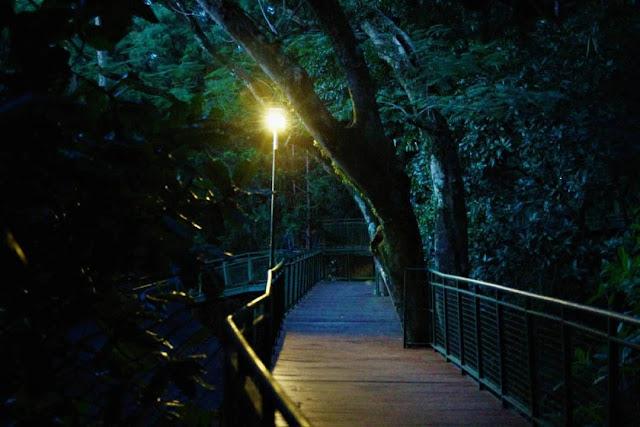 Suasana Malam Forest Walk Babakan Siliwangi