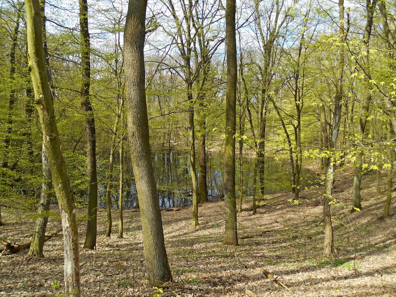 drzewa, las, wiosna, woda, krater