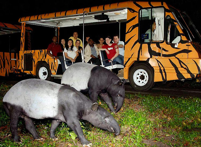 Take a Singapore Night Safari