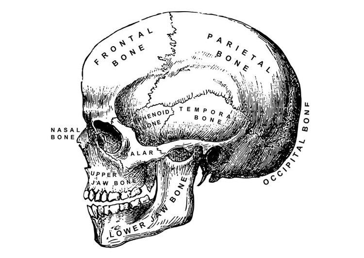 gabarito prova fonoaudiologia anatomia humana ufpb