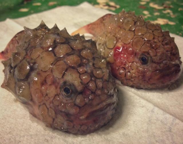 Spesies Laut Dalam