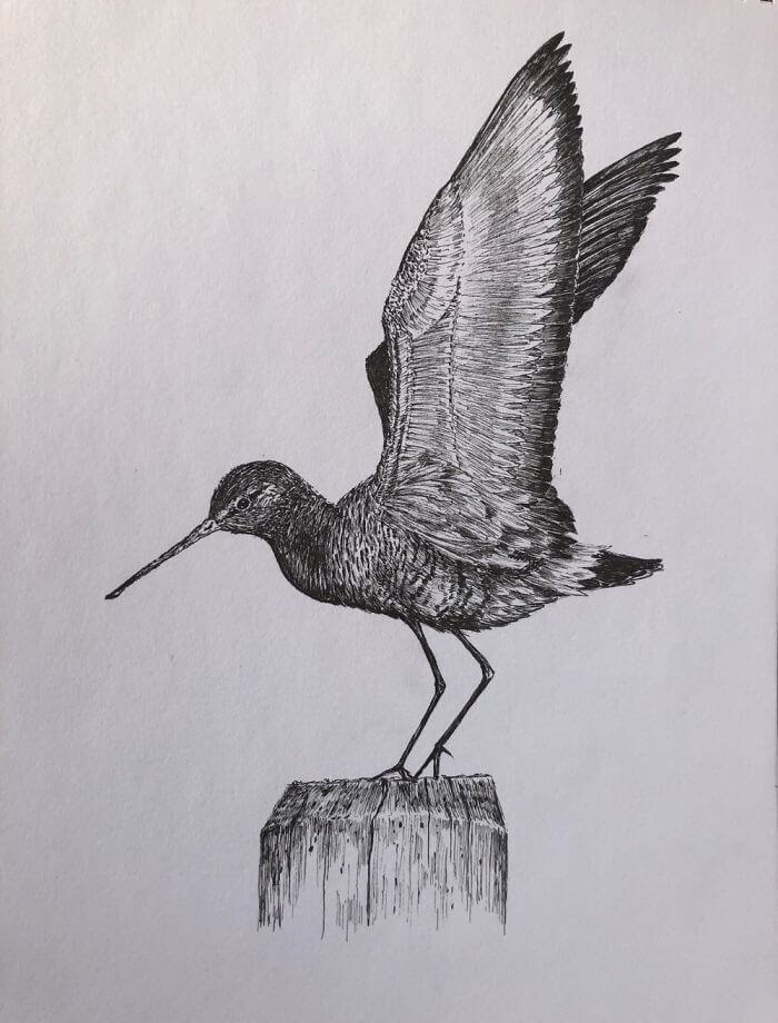 10-Black-Tailed-Godwit-Bas-Geeraets-Black-and-White-Drawings-of-Birds-www-designstack-co