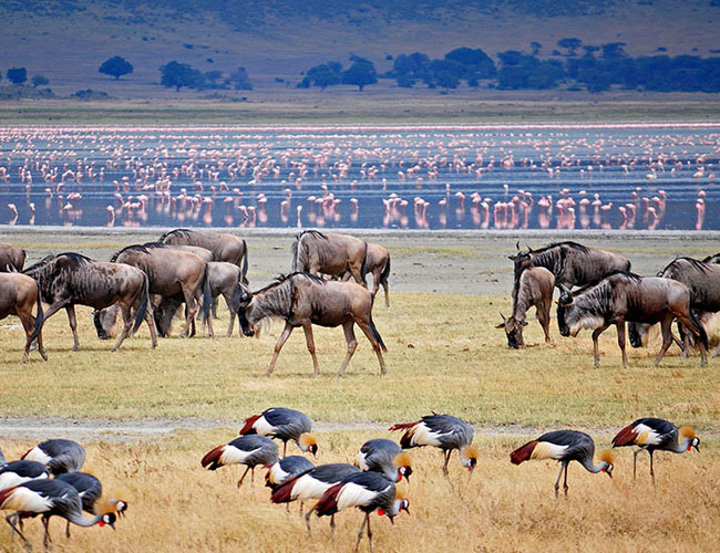 Xvlor Lake Manyara National Park is conservation area to protect soda lakes