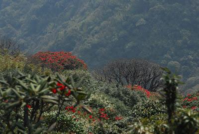 Du lịch sapa mùa hoa đỗ quyên