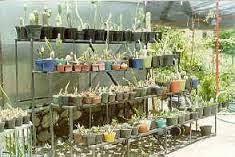 Horta em Casa9